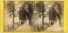 Clifton Illustrated stereoview showing a man visiting the graveyard on The Avenue